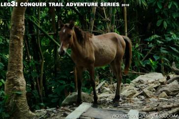 Horsey Encounter