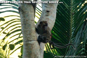 Monkey Encounter